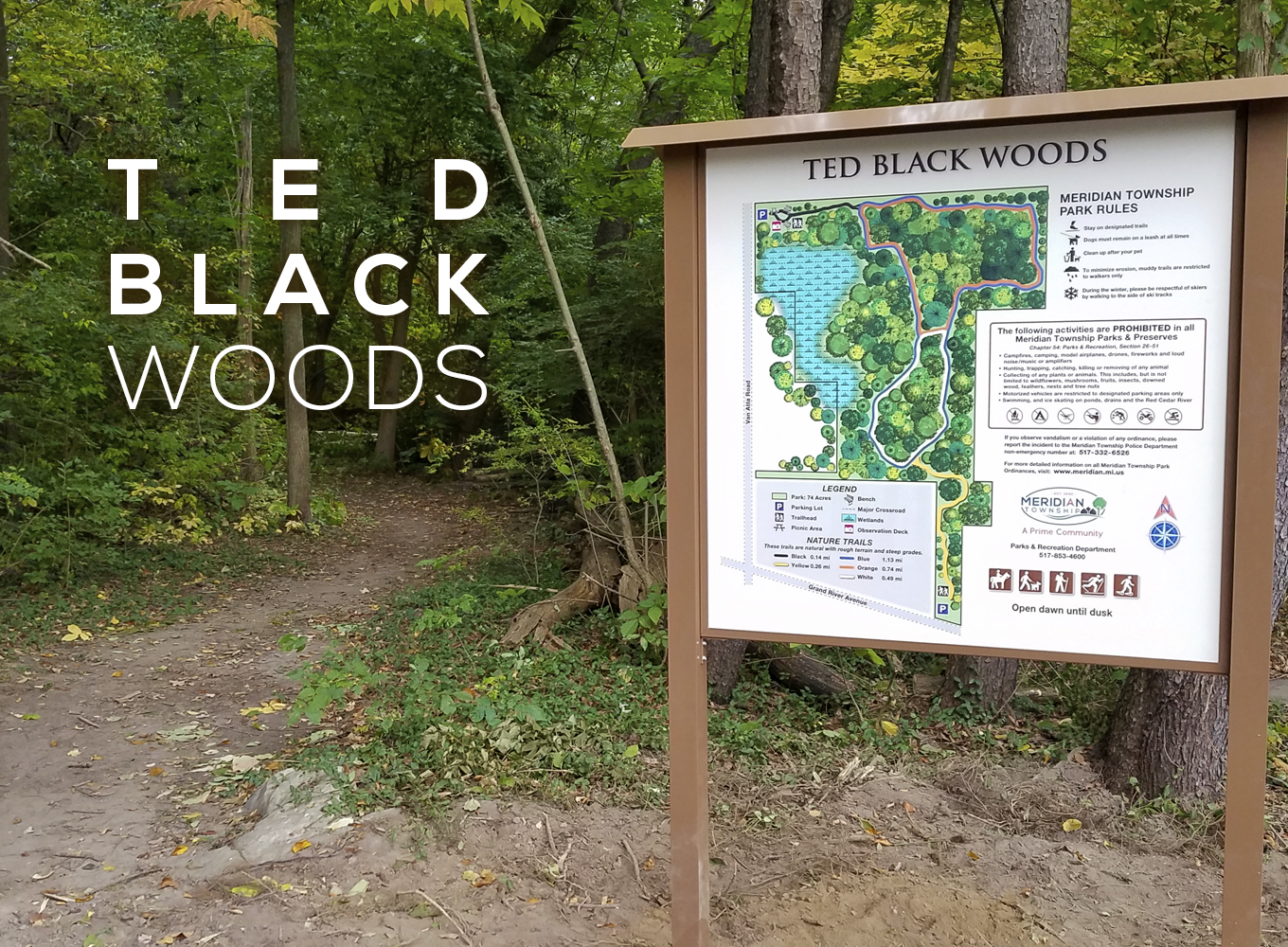 Ted Black Woods