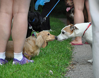 Two small dogs sniffing noses at Harris Nature Center