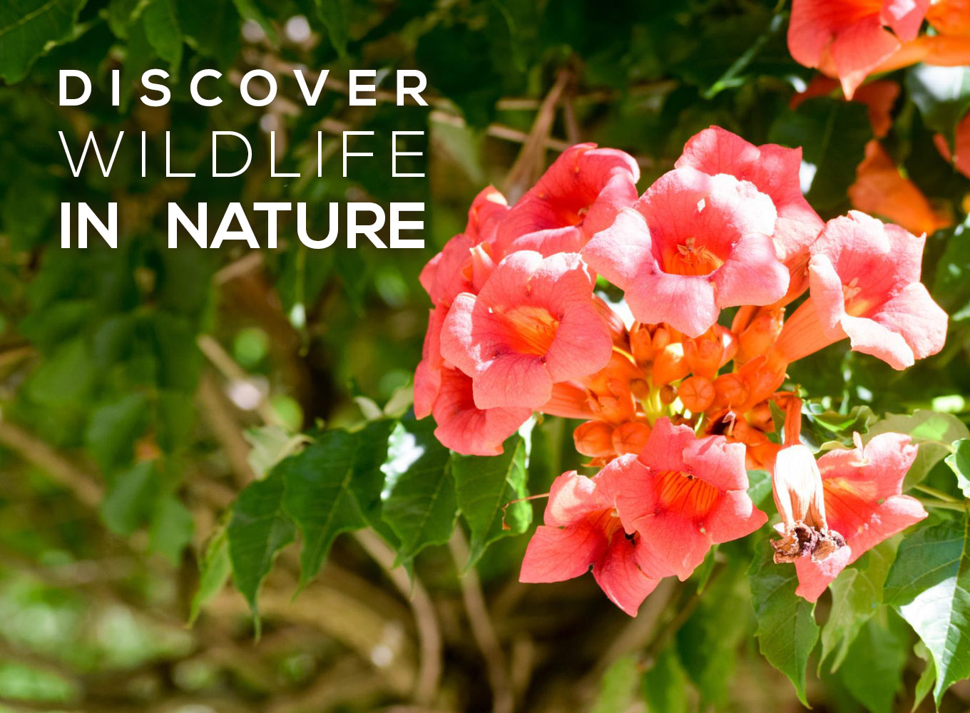 Discover Wildlife In Nature