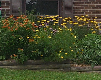 Native plants growing in front of a house