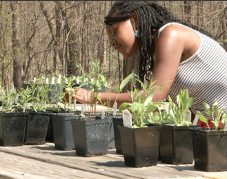 Woman looking at native plants in pots on a table at Harris Nature Center