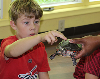 Turtles at Harris Nature Center Camps