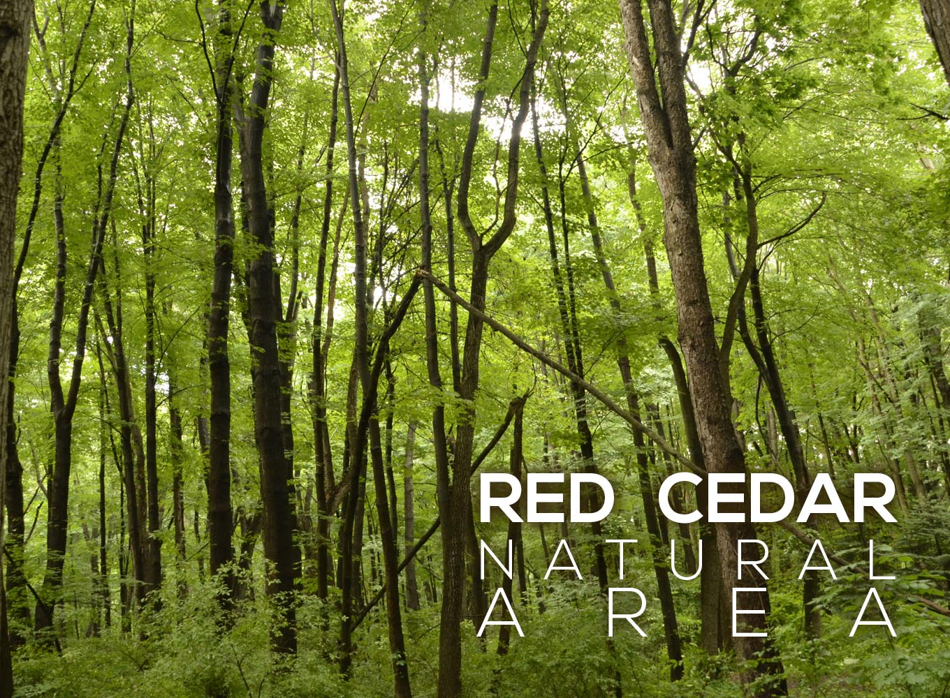 Red Cedar Natural Area
